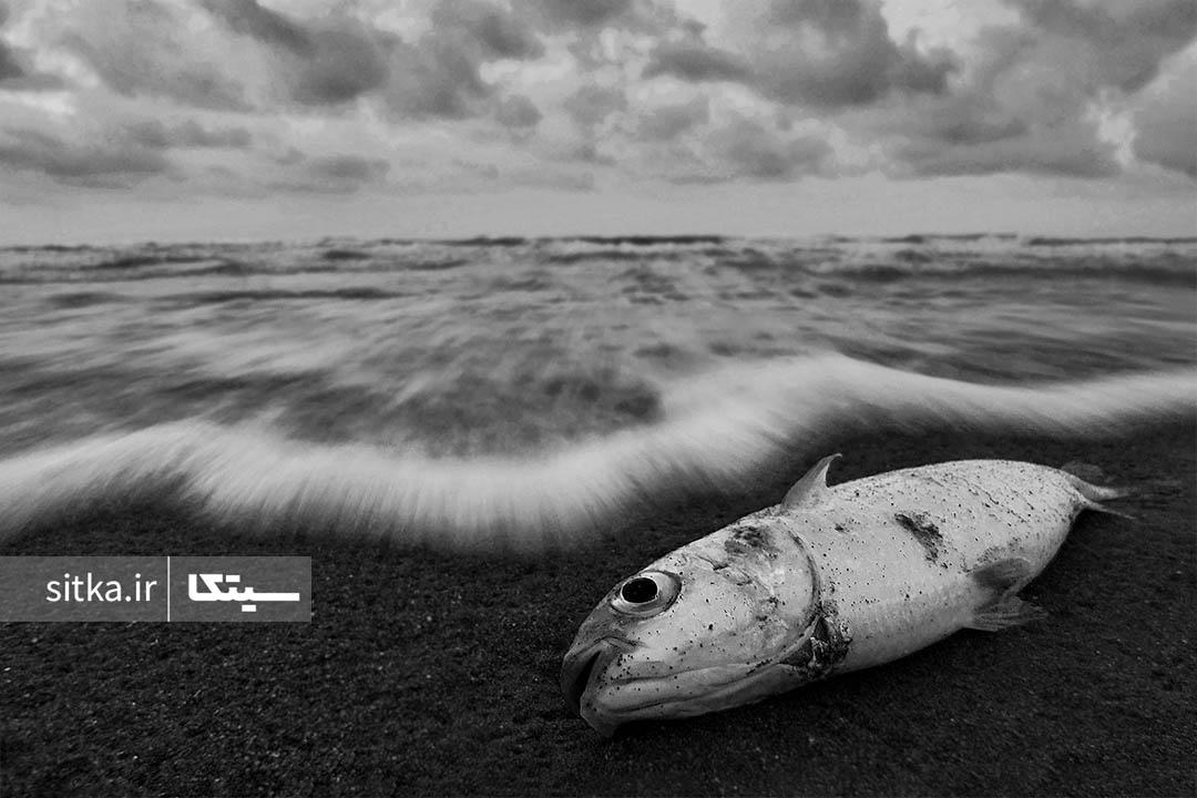 مرگ ماهی